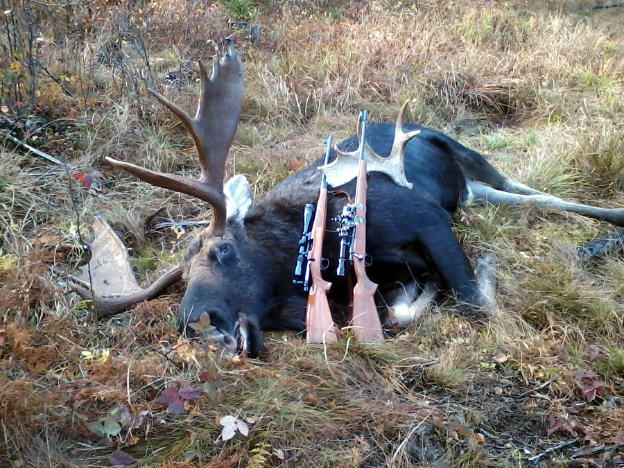 Moose From Front With 2 Rifles Amp Shed1 Small Image